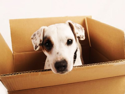 Easy Furniture Removals in Northern Cape, Free State and North West - Furniture Removal Tips - Moving House with Pets. Get FREE furniture removals quote - FREE, easy, fast